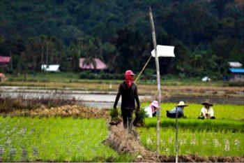 Prosumer kalangan belia di sektor agromakanan
